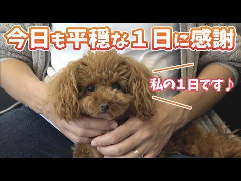 犬とその家族【トイプードル】新築一軒家の1日ルーティン