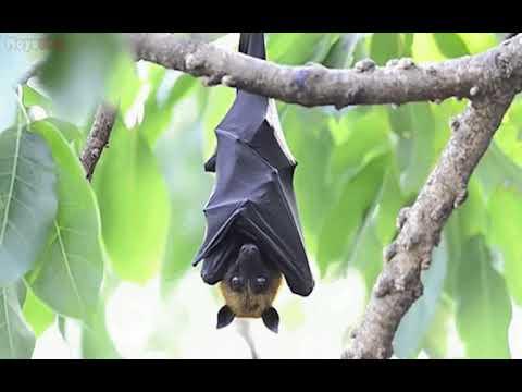 Los superhéroes de la noche: Los murciélagos