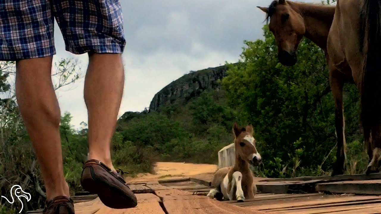 Man Helps Mother Horse Get Her Trapped Baby Safe | The Dodo