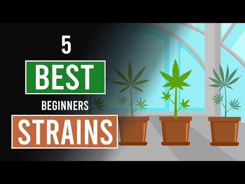 5 Easiest Cannabis Strains to Grow!