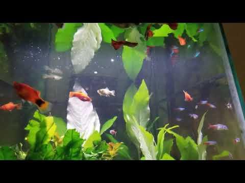 Over 100 Fish In 35 Gallon Hex Aquarium!!