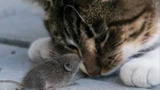 Смешные коты 5 (By WroldofBlizzard)