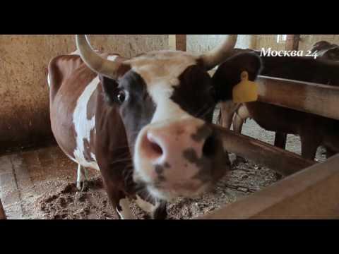 Маленькая Ферма в деревне Соколово - ТВ Москва 24