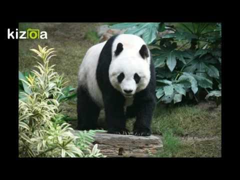 Kizoa Movie - Video - Slideshow Maker: The animal alphabet world 1