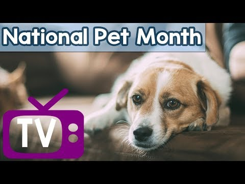 Dog TV for National Pet Month! Celebrate National Pet Month with Your Dog with Dogs Entertainment!