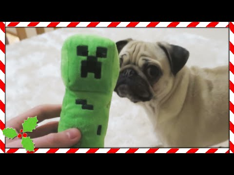 Thumbnail: PUGS VS CREEPER!! | Vlogmas