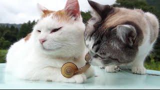 ТОП 5 Лучшие видео с кошками. Прикольные кошки.(ТОП 5 Лучшие видео с кошками. Прикольные кошки. 1. Кошки изучают улитку. 2. Серый котенок достает рыжую кошку...., 2015-09-22T14:42:50.000Z)