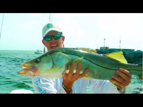 How to catch huge snook and snapper at skyway bridge youtube for Skyway bridge fishing report