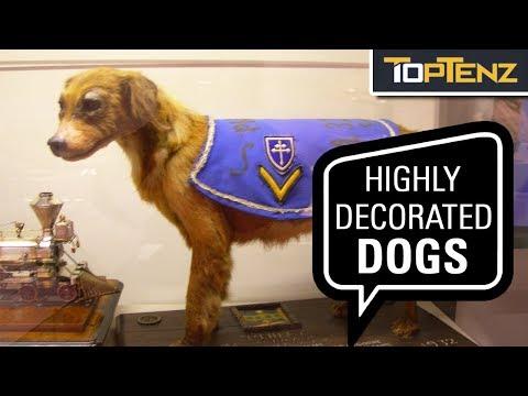 10 Dog Heroes Of World War I