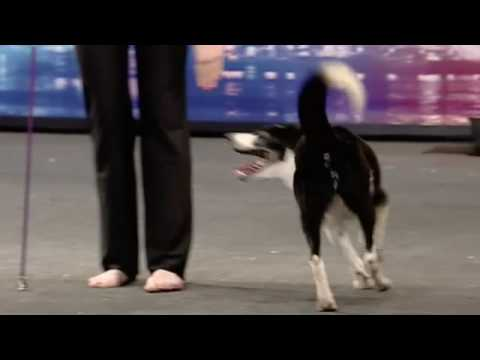 HiDef - BGT - Kate & Gin Canine freestyle 16:9 widescreen
