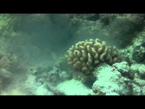 Coral Spawning Hawaii
