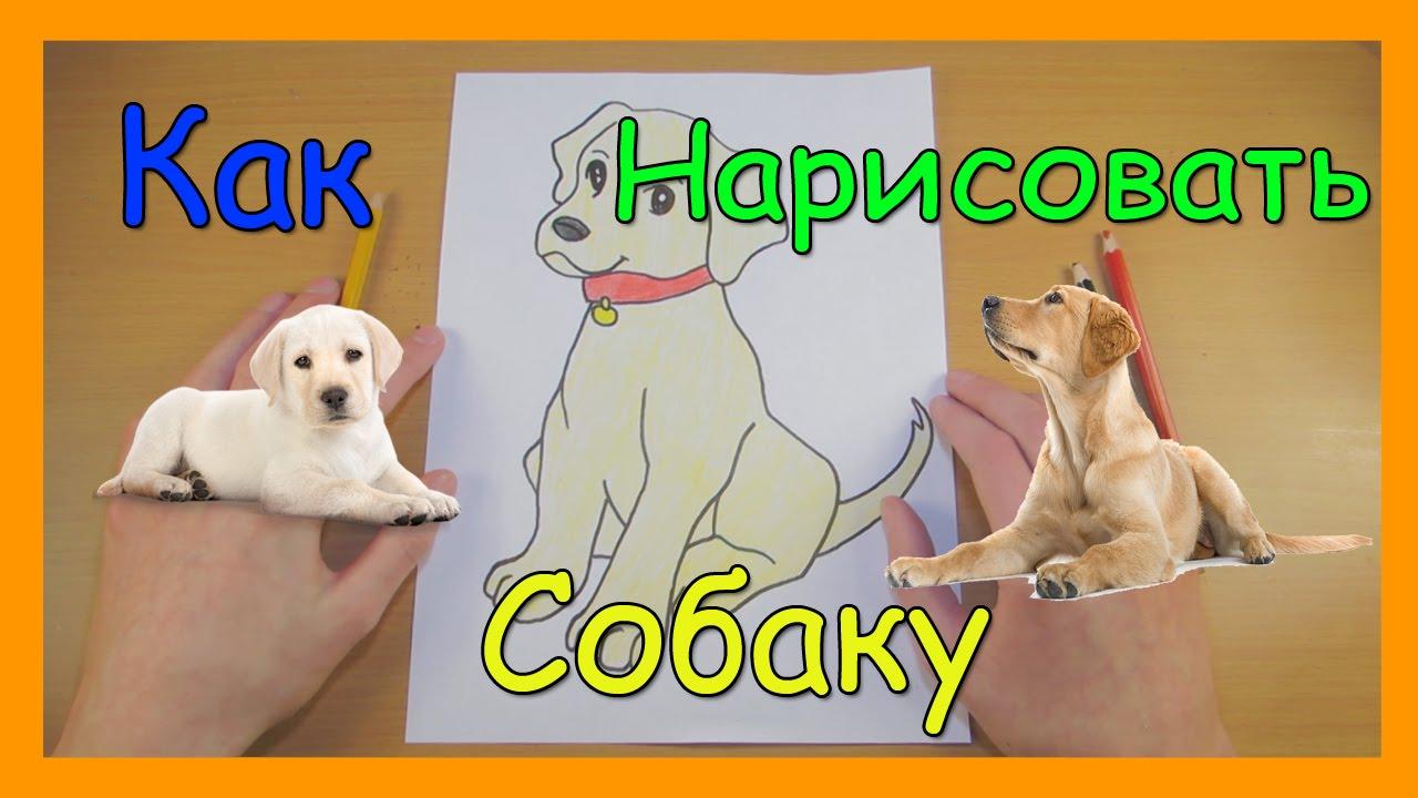 Как Нарисовать Собаку | Милый маленький щенок | Рисуем Лабрадора | Уроки Рисования