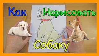 Как Нарисовать Собаку | Милый маленький щенок | Рисуем Лабрадора | Уроки Рисования(Как Нарисовать Собаку. В этом видео я вам покажу как нарисовать собаку породы лабрадор. Этот рисунок способ..., 2016-04-16T13:12:39.000Z)