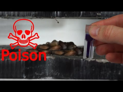 Thumbnail: Extracting Cyanide From Apple Seeds With Hydraulic Press