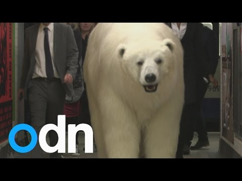 Giant polar bear spotted in London