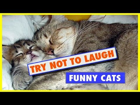 What will Happen! Try not to laugh - funny videos 2017