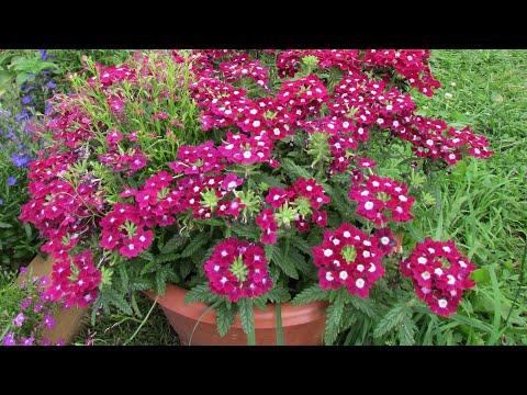 Какие цветы   посадить в кашпо. Моя композиция