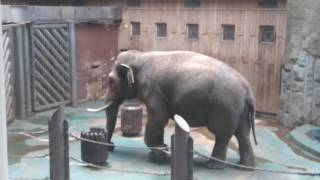 Слон в зоопарке в Москве