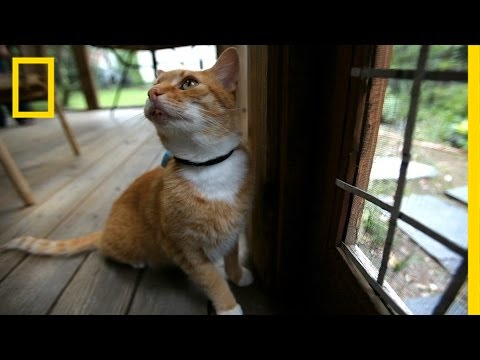 Thumbnail: Where Your Cat Goes May Blow Your Mind | National Geographic
