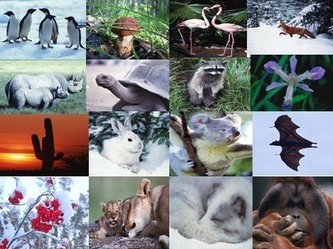 Среда обитания.  Экологические факторы. Ф 1. Урок биологии.