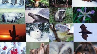 Среда обитания.  Экологические факторы. Ф 1. Урок биологии.(Видео урок 1 по теме