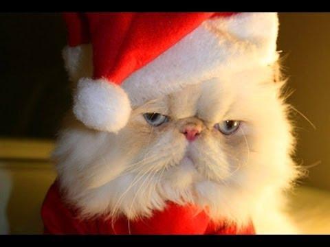 Videoclipuri Amuzante 2015 - Pisici Drăguț Și Câini Iubesc Crăciun Compilare - 720P