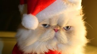 Videoclipuri Amuzante 2016 - Pisici Dr?gu? ?i Câini Iubesc Cr?ciun Compilare - 720P