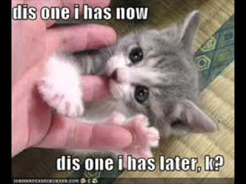 Super Funny Cat Pictures With Captions
