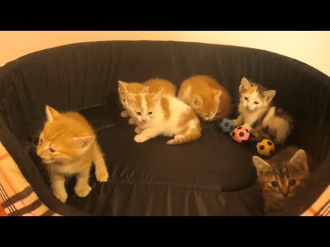 Kittens from the basement to a rented apartment