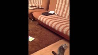 Бешеные коты 2 Кошка-мститель