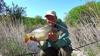 Поймать сазана рыбалка на реке донкой