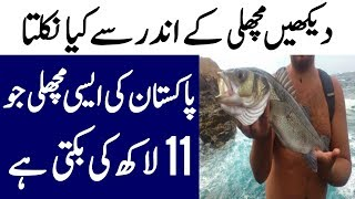 One of The Most Expensive Fish In The World Is From Pakistan