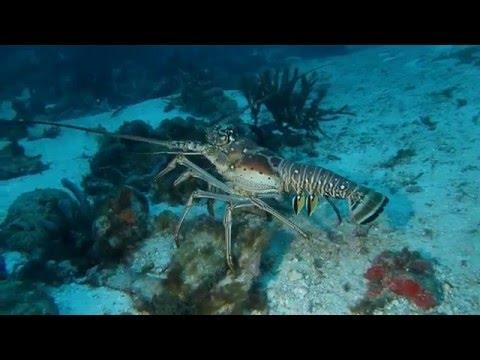Croisière Au Dela Plongee Grenadines Tobago episode 06
