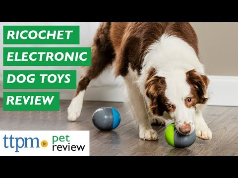 Ricochet Electronic Dog Toys From PetSafe