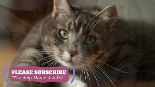 2 Hours Calming Cat Music  Soothing Songs for Your Kitty ☯LCZ139