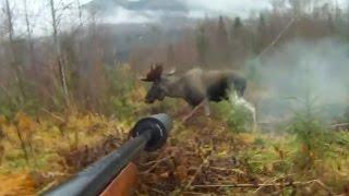 MOOSE HUNTING WITH DOG! Охота на лося с собакой!