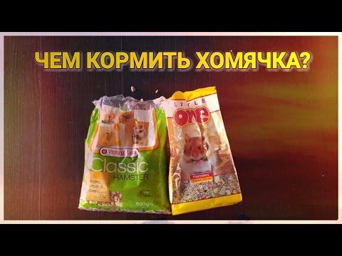 Каким кормом кормить джунгарских хомяков?