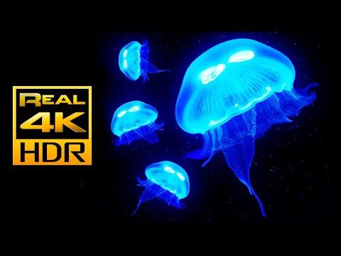 Amazing Jellyfish Aquarium