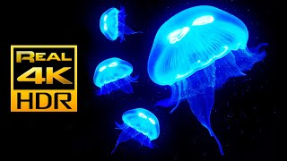 Amazing Jellyfish Aquarium in 4K HDR - Soothing & Relaxing Music - Great for Oled HDR TV's
