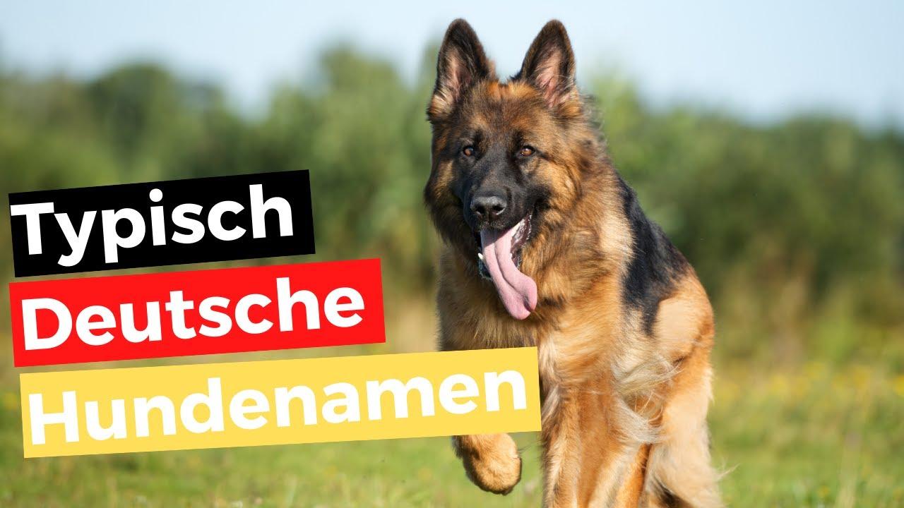 Deutsche Hundenamen Weiblich