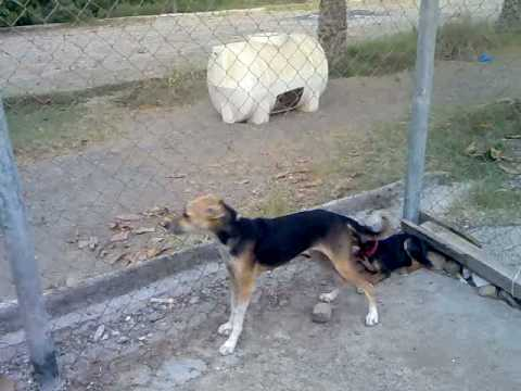 Vicious Dog Bark Sound