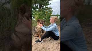 Собаки нашего приюта на прогулке
