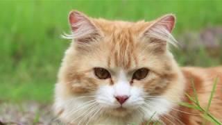 Free cats #27     Коты на свободе   無料の猫