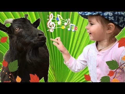 ДЕТСКИЕ ПЕСНИ ПРО ЖИВОТНЫХ - дети и коза на прогулке. Видео для детей