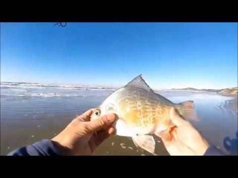 Newport oregon surf fishing youtube for Surf perch fishing oregon