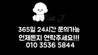 강아지분양펫제이 이탈리안그레이하운드[서울,인천,부천,수…