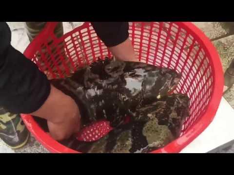 Black Grouper Fish Come To Seafood Market Vietnam