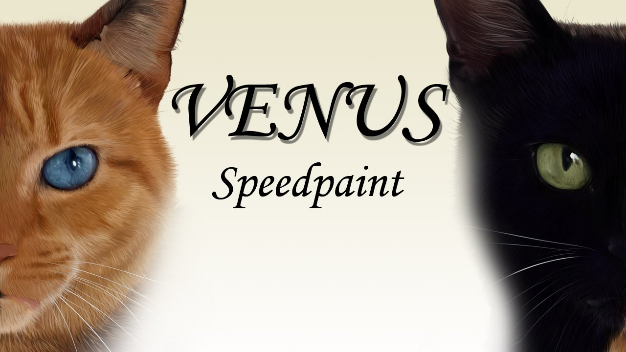Venus The Two Faced Cat Speedpaint YouTube - Venus two faced cat
