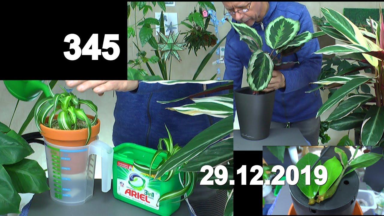 lebensmittelecht grün 1 Stück 58 x 32 x 11 cm Gärtnerbox