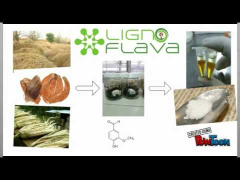 Ligno Flava: Sustainable Vanillin Natural Flavor Concept Video